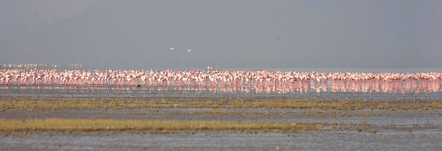Lake Natron, flamingos