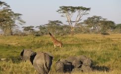 Serengeti National Park >> Serengeti National Park Tanzania Tourism