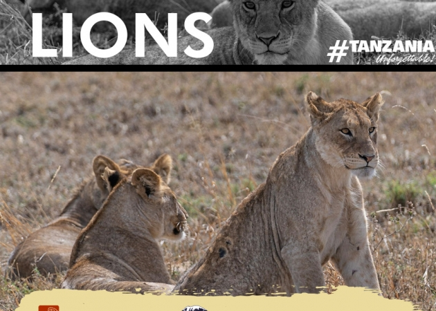 CAMPAIGNS TO SAVE OUR LIONS