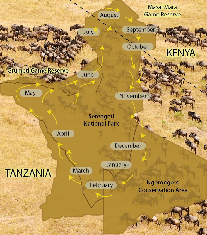 Serengeti National Park — - Tanzania Tourism on kilimanjaro map, tarangire national park, lake tanganyika map, serengeti national park, cape of good hope map, ngorongoro crater map, kalahari map, himalayas map, sahel map, zambezi river map, congo river map, niger river map, sinai peninsula map, great victorian desert map, mount kilimanjaro, africa map, ngorongoro conservation area, mara river, horn of africa, lake nyasa map, lake victoria map, great rift valley map, victoria falls map, tanzania map, nile map, atlas mountains map,